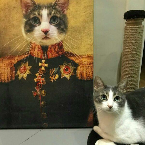 kedi general kanvas
