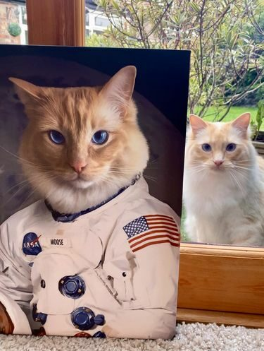kedi astronot kanvas