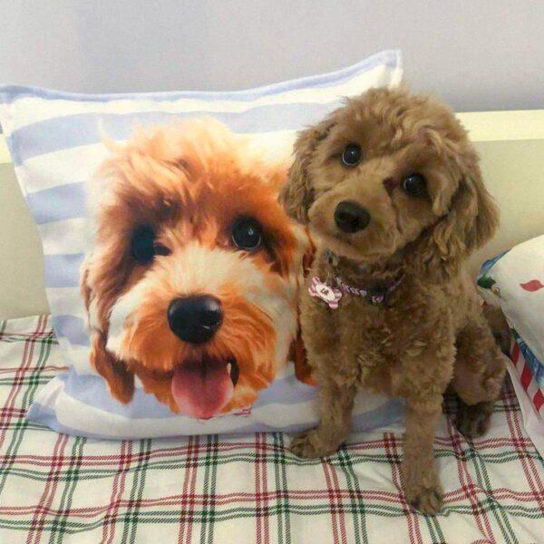 Özel Tasarım Evcil Toy Poodle çizgili yastık