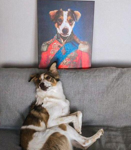 admiral köpek tablosu