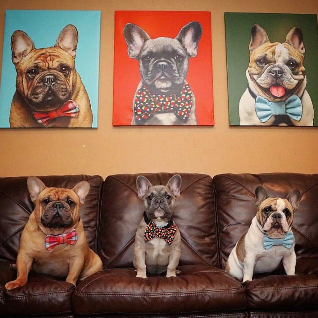 petcanvas pop art hayvan portresi