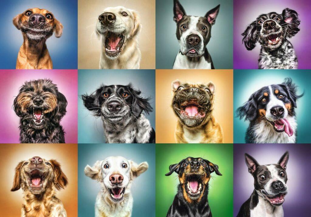 Köpek Tasarımlı Evcil Hayvan Ürünleri